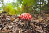 Mushroom against blurred plants