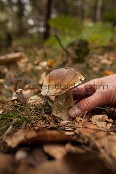 Hand touching mushroom on forest ground