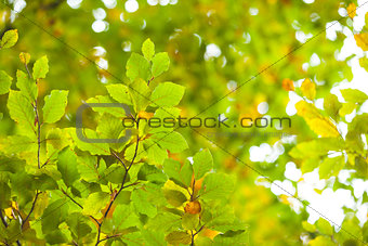 Detail shot of bright green leaves