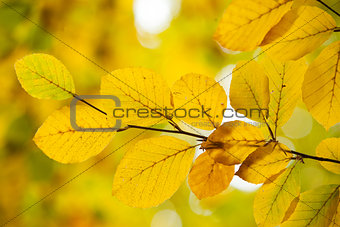 Autumnal leaves against blurred plants