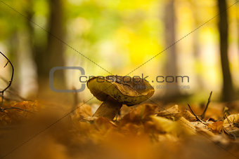 Close up shot of a mushroom on forest ground