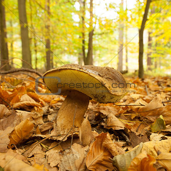 Close up of a mushroom on forest ground