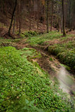 Narrows stream flowing along in forest