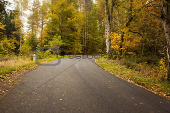 Country road along trees in the lush forest