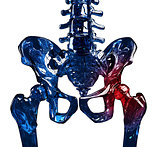 Glass skeleton 3D hip pain concept