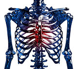 Glass skeleton thoracic pain