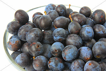 Sloes - Fruits of blackthorn
