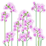purple orchids tile