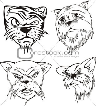 Aggressive cat heads