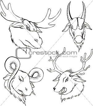 Aggressive heads of deers and goats