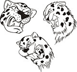 Aggressive leopard heads
