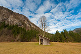 Meadow with barn and big tree
