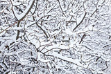 snowy winter trees background