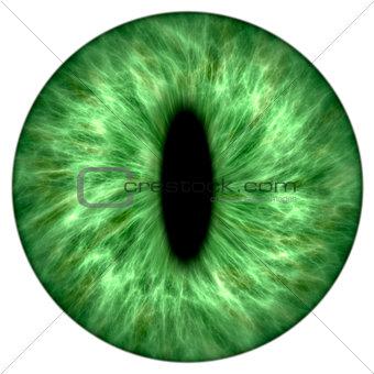 green animal iris