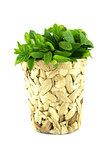 fresh green mints