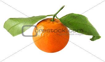 Bright tangerines