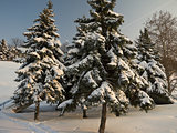 Winter time - beauty in nature