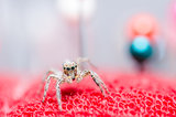 Spider and pins