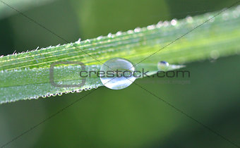 A drop of dew on a blade of grass
