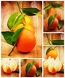 Collection of Tangerine