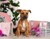 Mixed-breed dog, 7 months old, with Christmas tree and gifts in front of white background