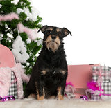 Mixed-breed dog, 4 years old, with Christmas tree and gifts in front of white background