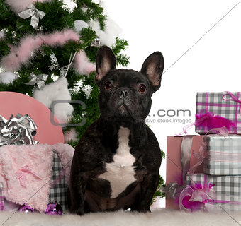 French Bulldog, 1 year old, with Christmas tree and gifts in front of white background
