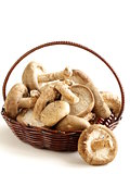 organic natural raw mushrooms