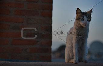 Rising cat