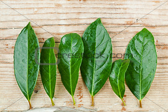 green leaves on rustic wooden background