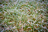 ice the grass