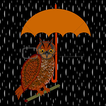 An owl with umbrella in the rain