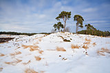 pine trees on snowy hill in winter