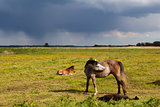 mother horse and foal on pasture
