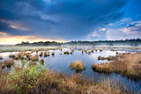 blue stormy sky over swamp with cotton-grass