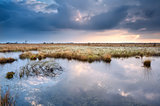 swamp with cottograss before sunset