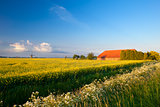farm, windmill and canola fields under blue sky