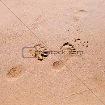 Footprint on sand beach