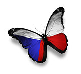 Czech flag butterfly, isolated on white