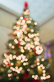 Christmas Tree Perspective Defocused with Bokeh Lights