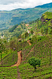 Mountainous terrain of Sri Lanka