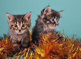 Chistmas portrait of little kittens