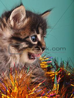 small  kitten among Christmas stuff