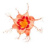 orange flower splashes
