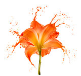 orange flower splashes