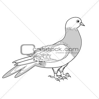 A monochrome sketch of a pigeon