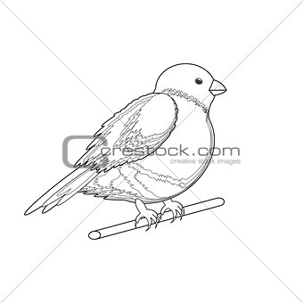 A monochrome sketch of a bird (bullfinch)
