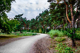 Road in the coniferous forest in the evening