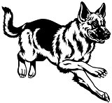 german shepherd black white