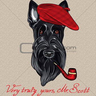 vector funny cartoon hipster dog Scottish Terrier